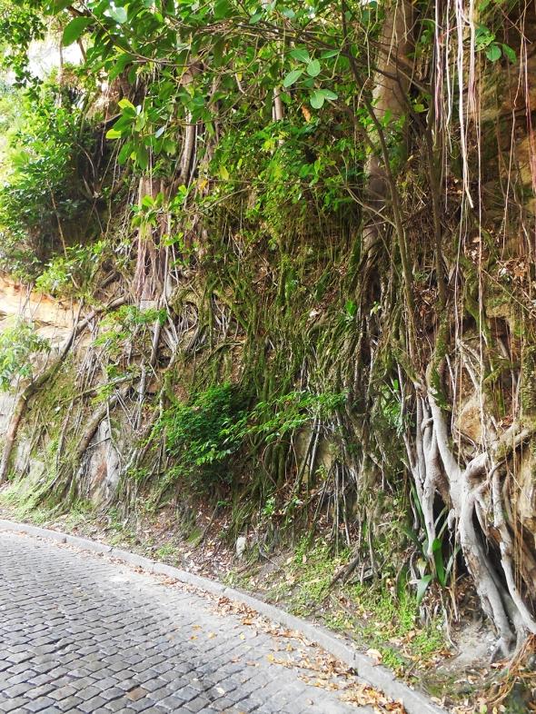 """Essa rua é uma das minhas """" Preferidas """", pelas árvores gigantescas  e suas raízes idem."""